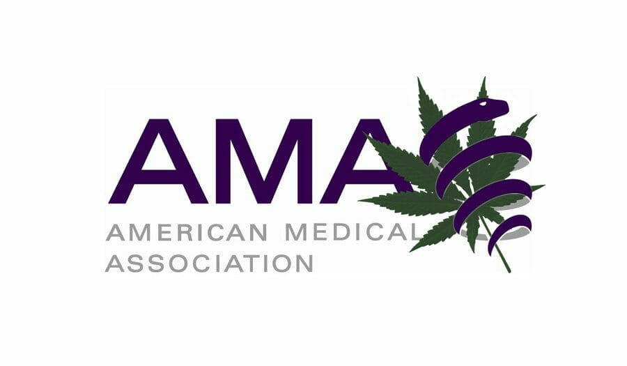 AMA Wants Immunity For Physicians Recommending Cannabis